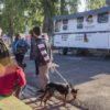 29-08-16 Nuevo operativo de zoonosis en Remedios de Escalada